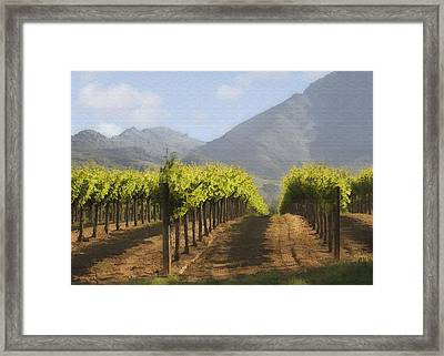 Mountain Vineyard Framed Print by Sharon Foster