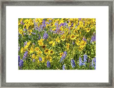 Mountain Wild Flowers Framed Print by Wes and Dotty Weber