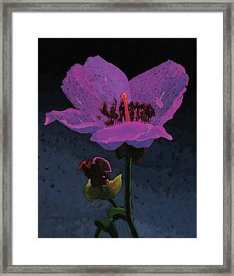 Mountain Wildflower Framed Print by Bob Coonts