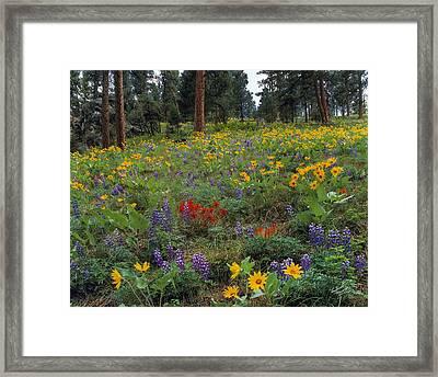 Mountain Wildflowers Framed Print