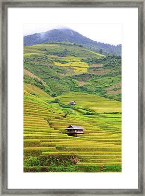 Mountainous Rice Field Framed Print by Akari Photography