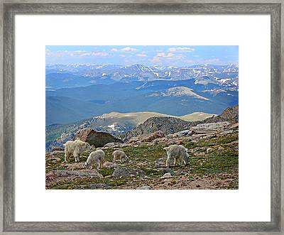 Mountains And Goats Framed Print