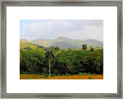 Mountains And Palms Framed Print