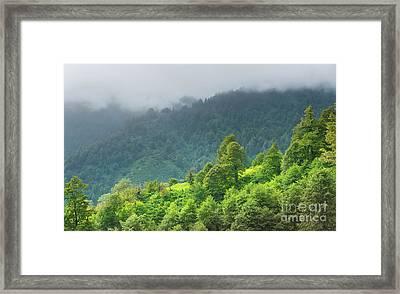 Mountains Vegetation Framed Print by Svetlana Sewell