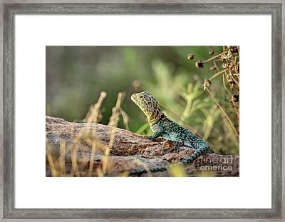 Mountian Boomer Framed Print