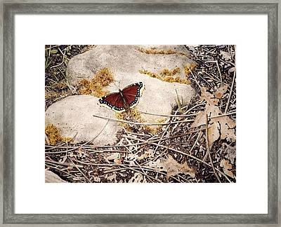Mourning Cloak Framed Print by Conrad Mieschke