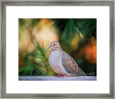 Framed Print featuring the photograph Mourning Dove Bathed In Autumn Light by Kerri Farley of New River Nature