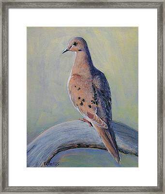 Mourning Dove Framed Print by Charles Wallis