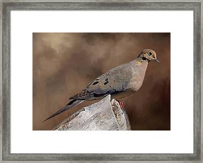 Framed Print featuring the photograph Mourning Dove by Donna Kennedy