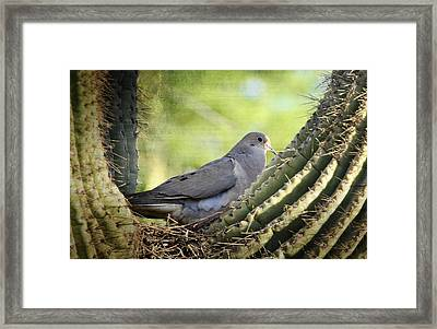 Mourning Dove In The Morning  Framed Print by Saija  Lehtonen