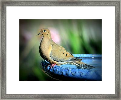 Mourning Dove Perched Framed Print