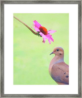 Framed Print featuring the photograph Mourning Dove by Sue Collura