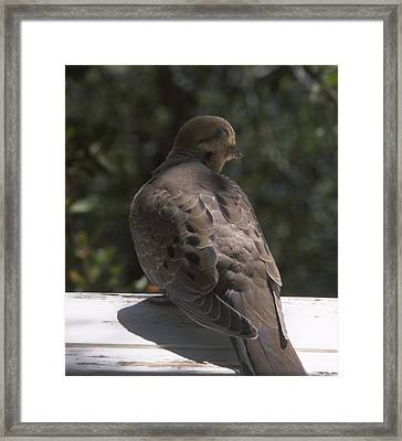 Mourning Dove - Tillie Creek Framed Print by Soli Deo Gloria Wilderness And Wildlife Photography