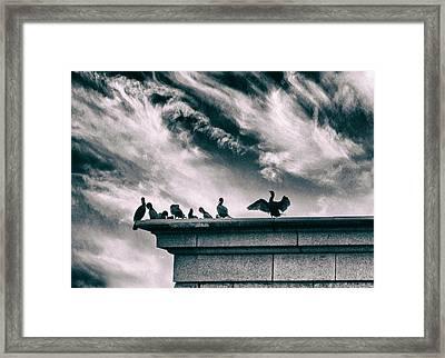 Cormorant's Cry Framed Print by Jessica Jenney
