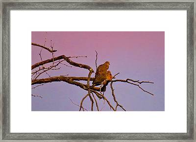 Mourning Doves Framed Print