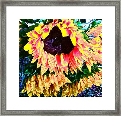 Mourning Framed Print by Gwyn Newcombe