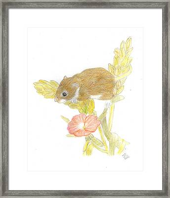 Mouse On The Corn Framed Print by Jacqueline Essex