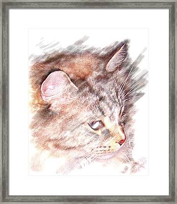 Framed Print featuring the photograph Mouser by Barbara MacPhail