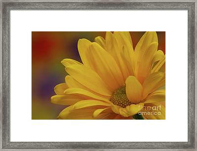 Movement In Yellow Framed Print by Christine Amstutz