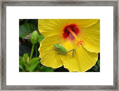 Movin On Framed Print