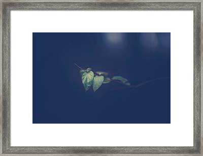 Framed Print featuring the photograph Moving In The Shadows by Shane Holsclaw