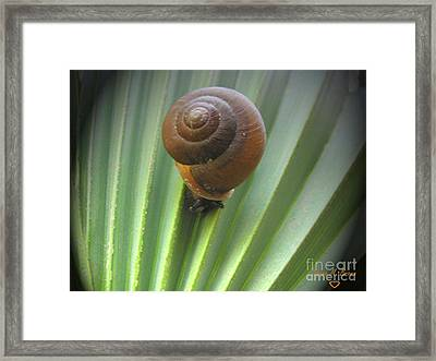Framed Print featuring the photograph Moving Slow by Donna Brown