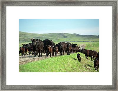 Moving Up The Road Framed Print by Todd Klassy