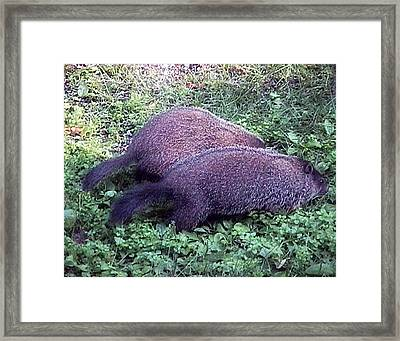 Mowing In Tandem Framed Print