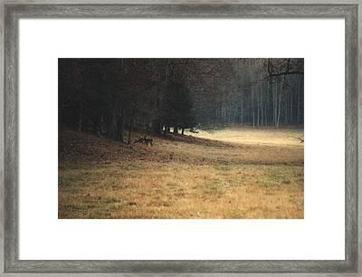 Mprints - Cade's Cove Framed Print