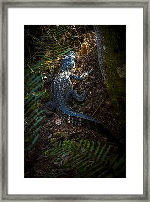Mr Alley Gator Framed Print by Marvin Spates