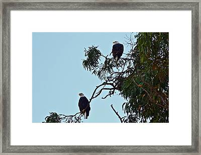 Mr. And Mrs. Bald Framed Print
