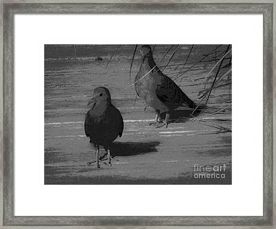 Mr And Mrs Dove Framed Print