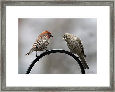 Mr. And Mrs. House Finch Framed Print