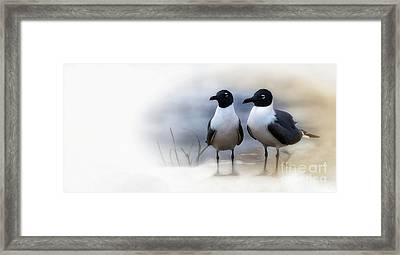 Mr And Mrs Laughing Gull Framed Print