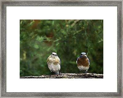 Mr And Mrs Framed Print by Rob Travis