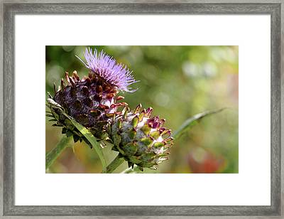 Mr And Mrs Thistle  Framed Print