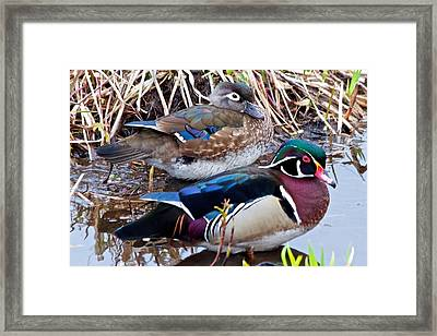 Mr And Mrs Woodducks Framed Print
