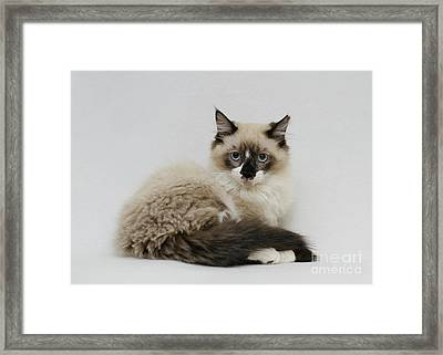 Mr. Atkin Framed Print