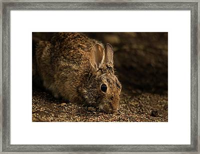 Mr. B Framed Print