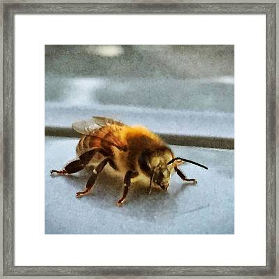 Mr Bee On My Car #bee #naturelovers Framed Print