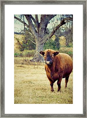 Mr. Big Framed Print by Jan Amiss Photography