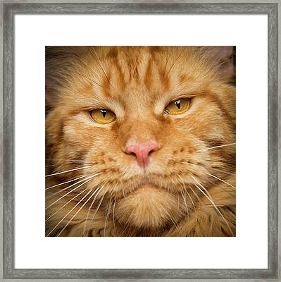 Framed Print featuring the photograph Mr. Big Mouth by Robert Sijka