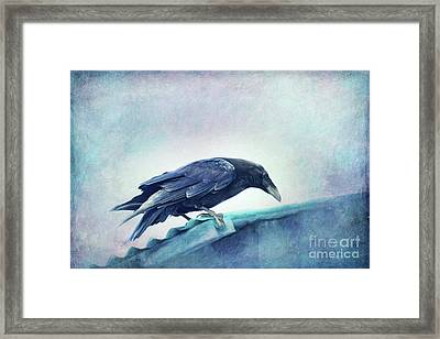 Mr. Bluebird Framed Print by Priska Wettstein