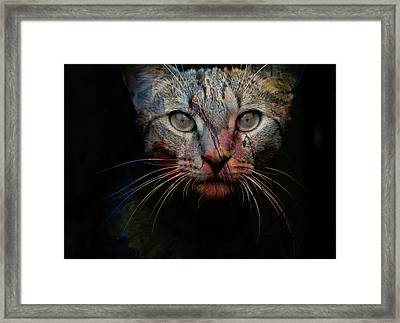 Mr Bo Framed Print