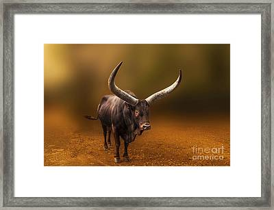 Mr. Bull From Africa Framed Print