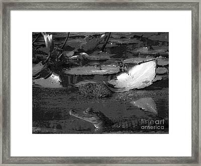 Mr. Caiman Framed Print