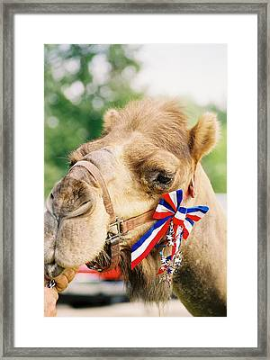 Mr. Camel Framed Print by Cheryl Vatcher-Martin