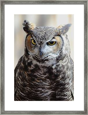 Mr. Cross Framed Print by Debby Pueschel