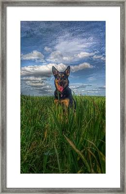 Mr Darcy Framed Print by Isabella F Abbie Shores FRSA