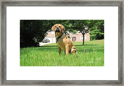 Mr. Darcy Puggle Pup Framed Print